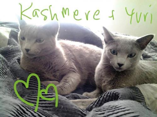 Kashmere & Yuri